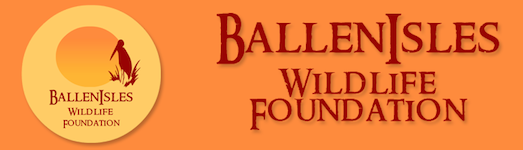 BallenIsles Wildlife foundation logo
